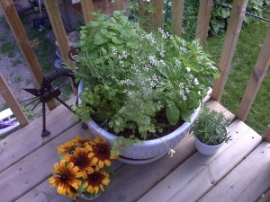 Dill, mint, basil, cilantro, lavender, and some yellow flowers. No flowers. But I'm the only one on the block with a potted garden this fabulous.